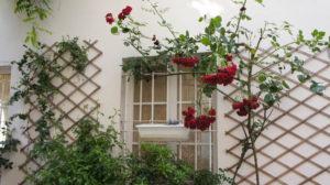 Petite fenêtre bien fleurie rue des Thermopyles Paris