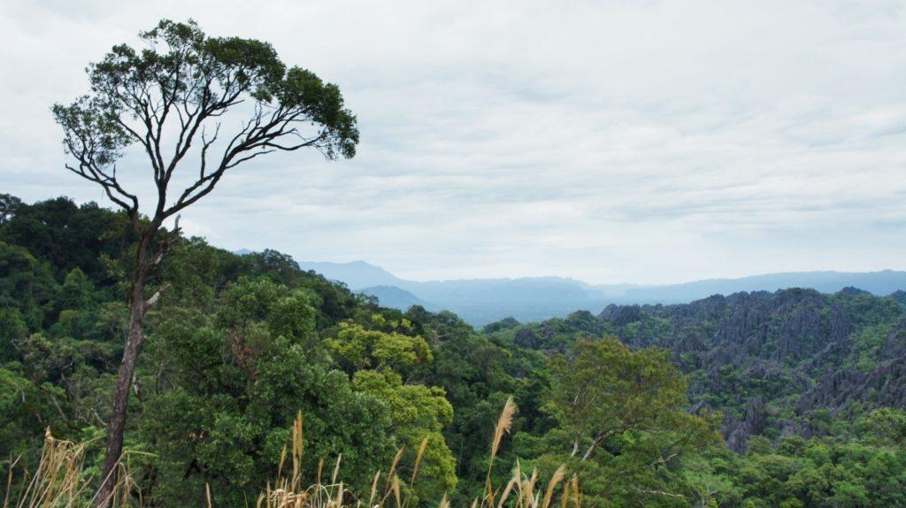 Superbe point de vue sur la forêt de pierre