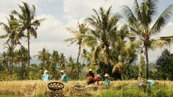 Bali Sekumpul itinéraire roadtrip