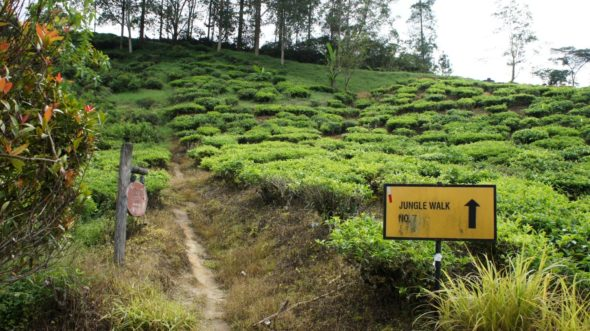accès randonnée cameron highlands