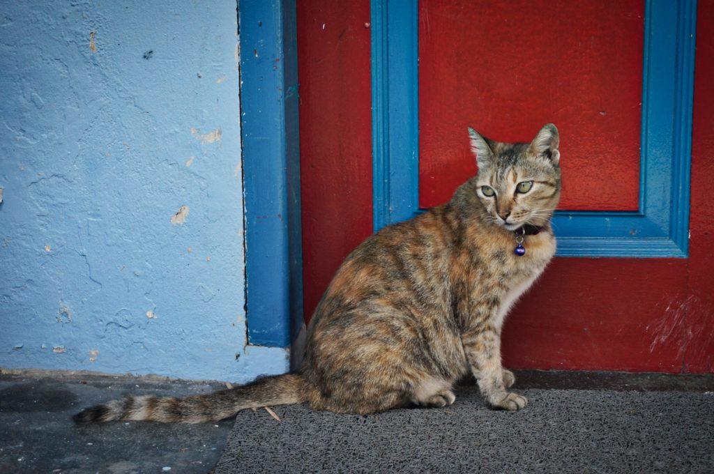 Chat devant une porte à Malacca