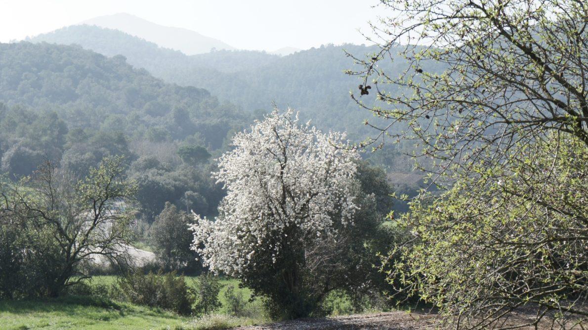 Paysages autour de Madremanya