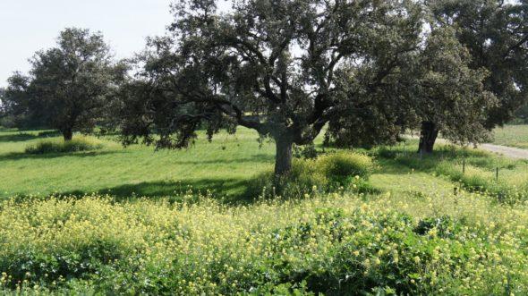 Un arbre dans un champ
