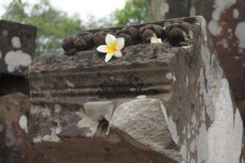Une fleur de frangipanier sur des ruines à Vat Phou