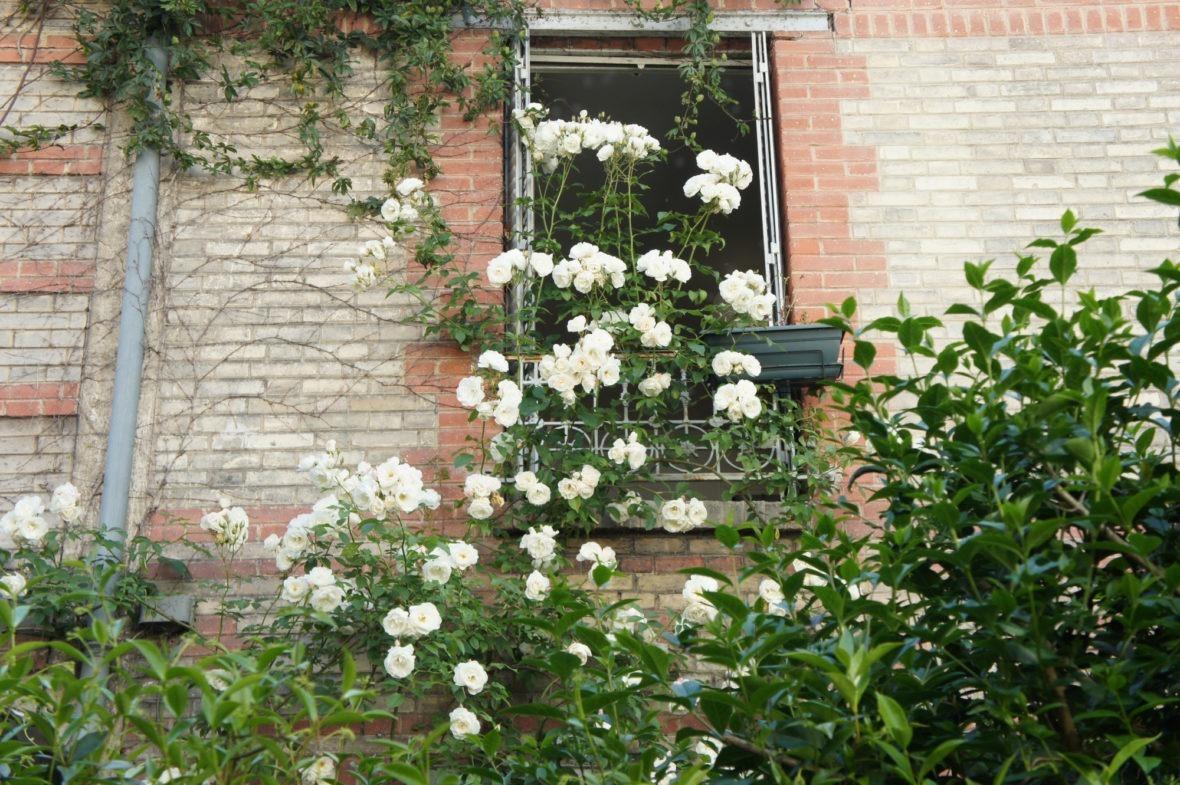 Une maison fleurie à la Mouzaïa Paris