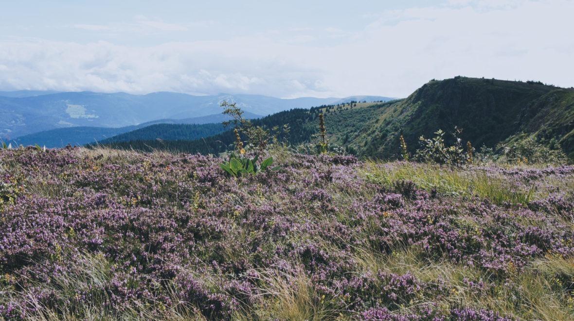 Randonnée dans les Vosges Alsace