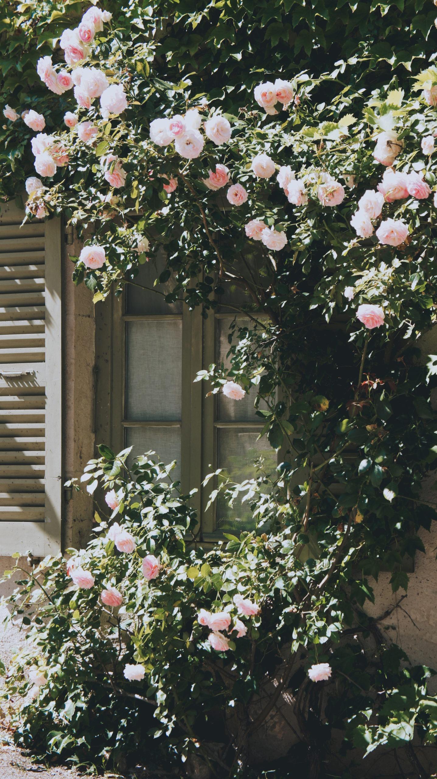 fenêtre en fleurs à flavigny sur ozerain