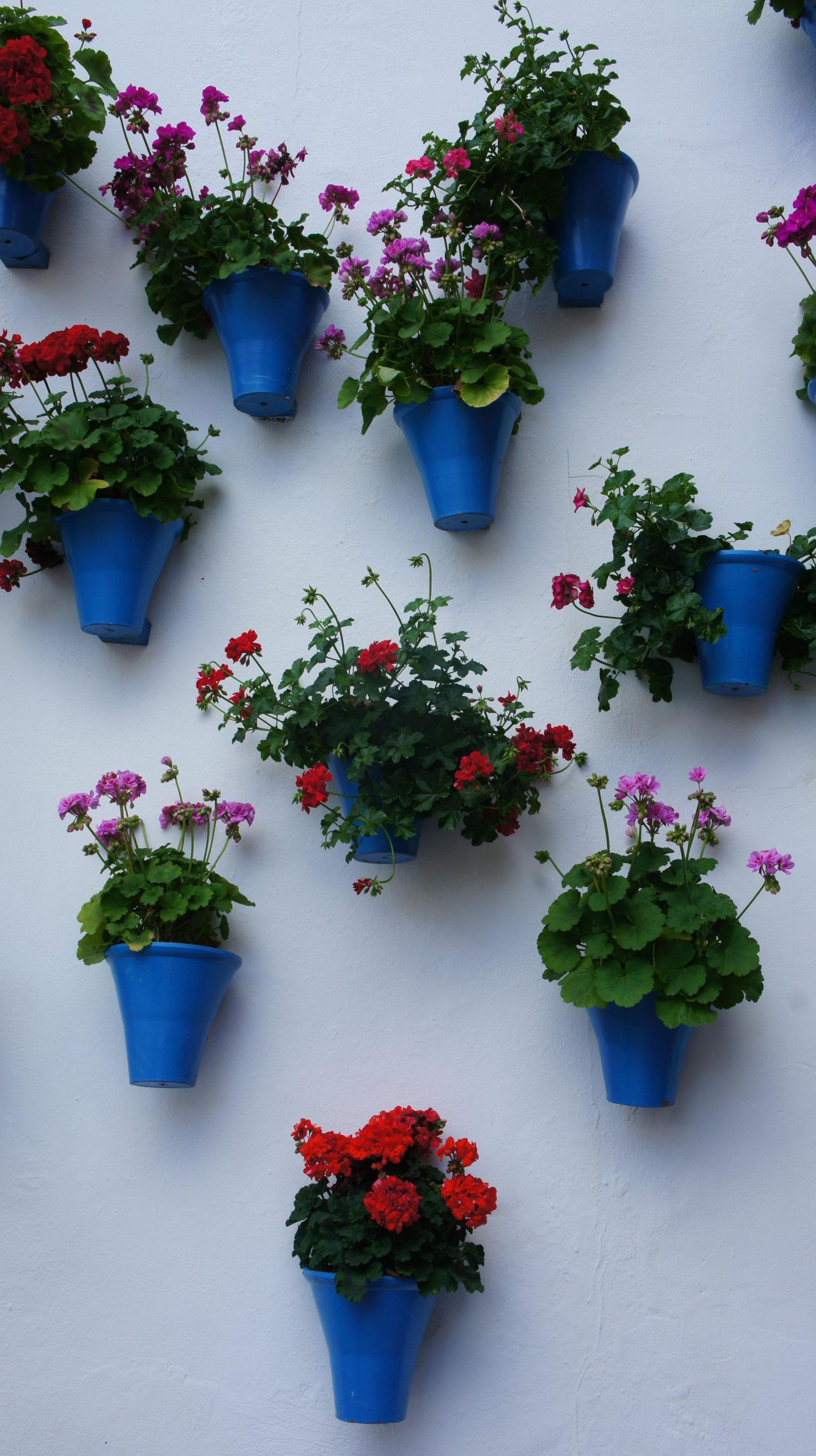 Des pots de fleurs règnent des murs de Cordoue