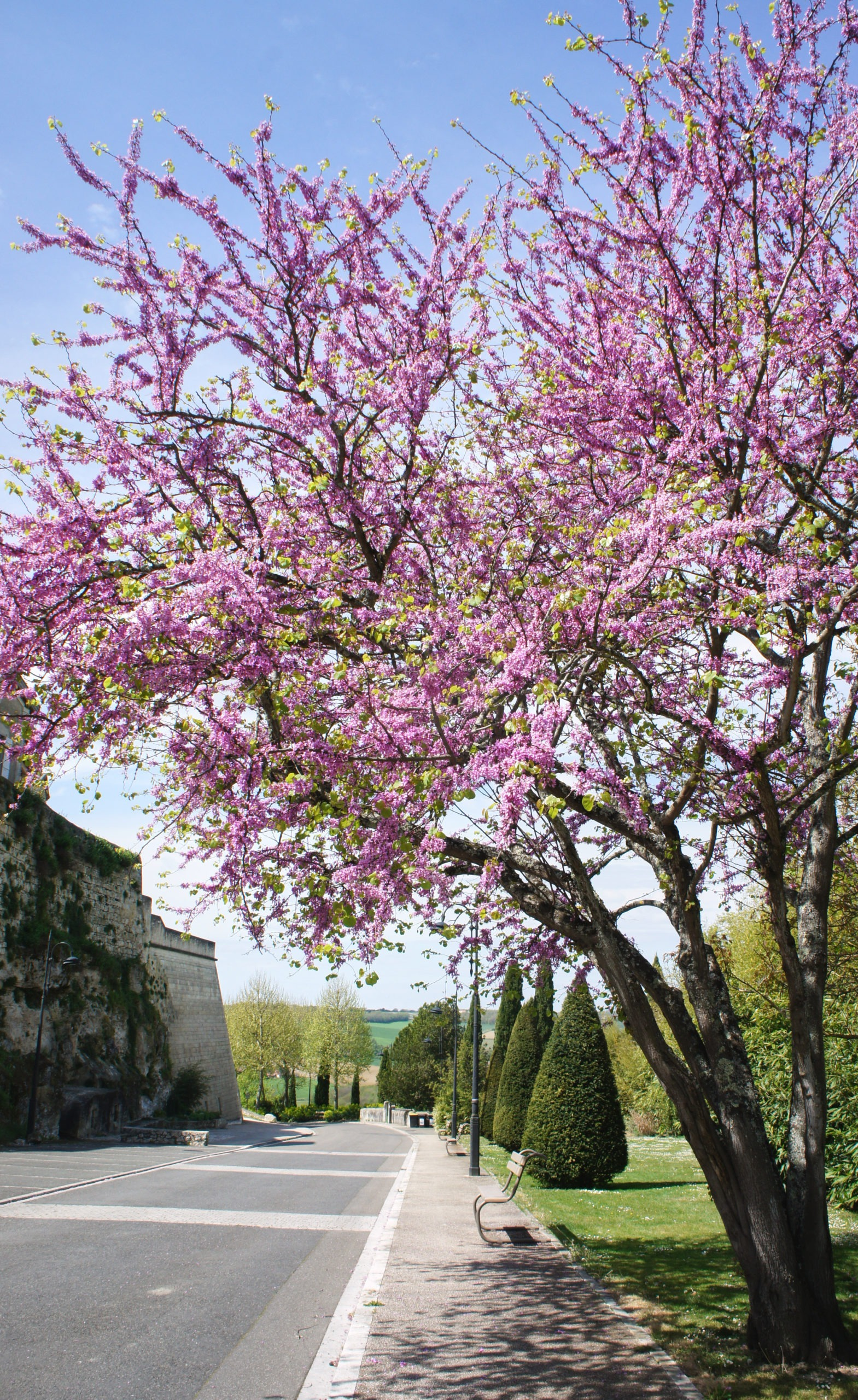 Les couleurs de printemps à Lectoure