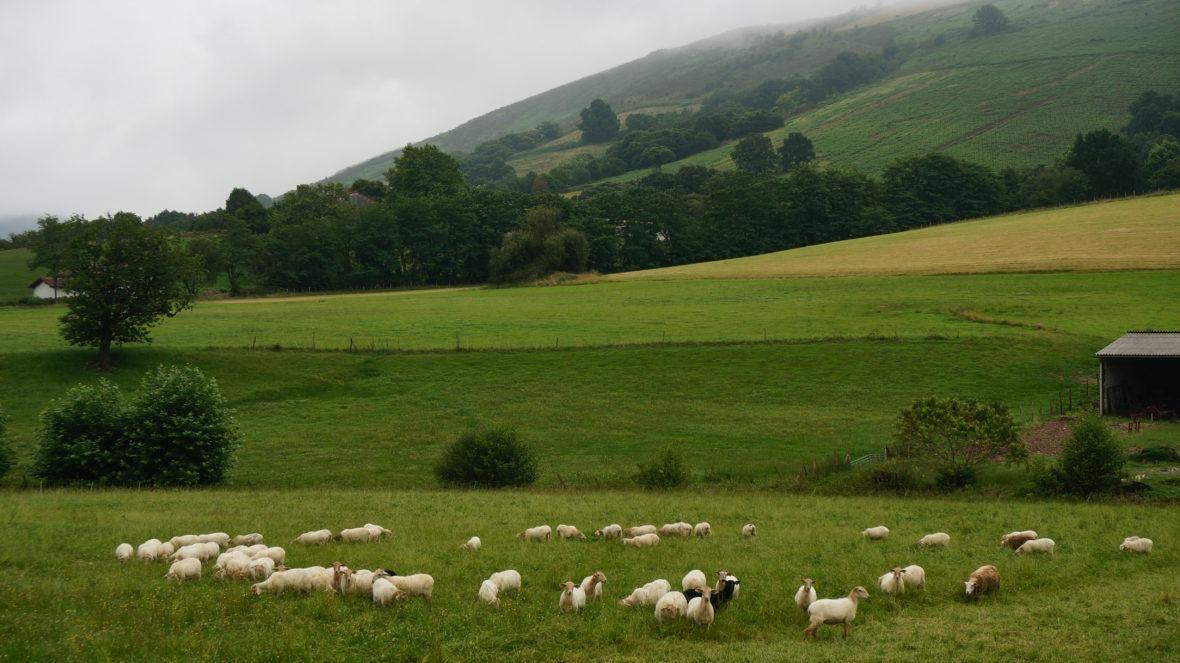 Paysage du pays basque nord
