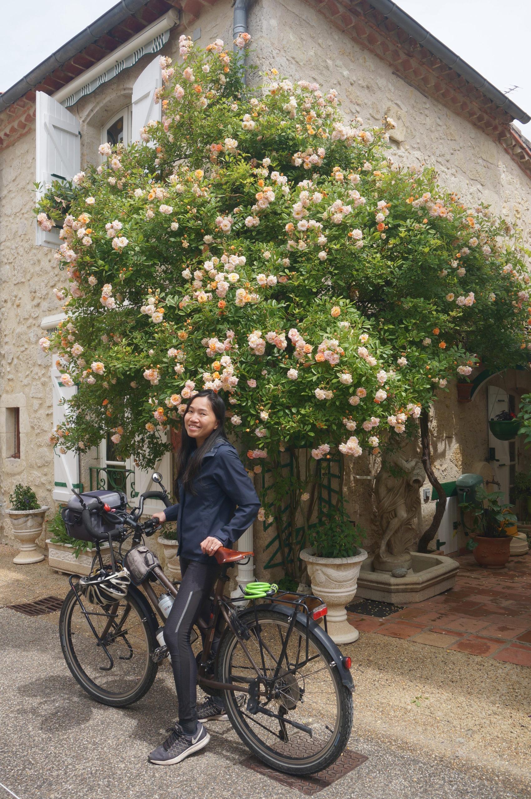 Les roses de Blaziert dans le Gers